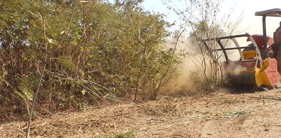 trituracao-florestal