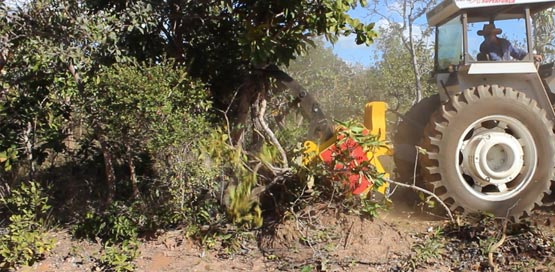 tipo-triturador-florestal